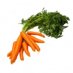 Zanahoria 1 Kg.