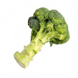 Brócoli Verde Una Pieza.