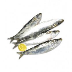 Sardinas Enteras 500gr (6-8 sardinas)