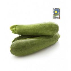Calabacin Verde Ecológico