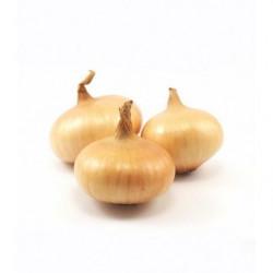 Cebolla Platillo Holland